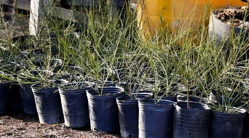 Plantines Ushuaia
